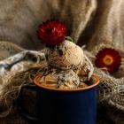 Oreo Dulce De Leche Ice Cream