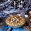 Eggnog White Chocolate Oatmeal