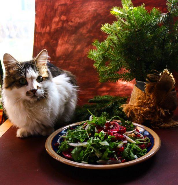 Blood Orange Fennel Pomegranate Salad