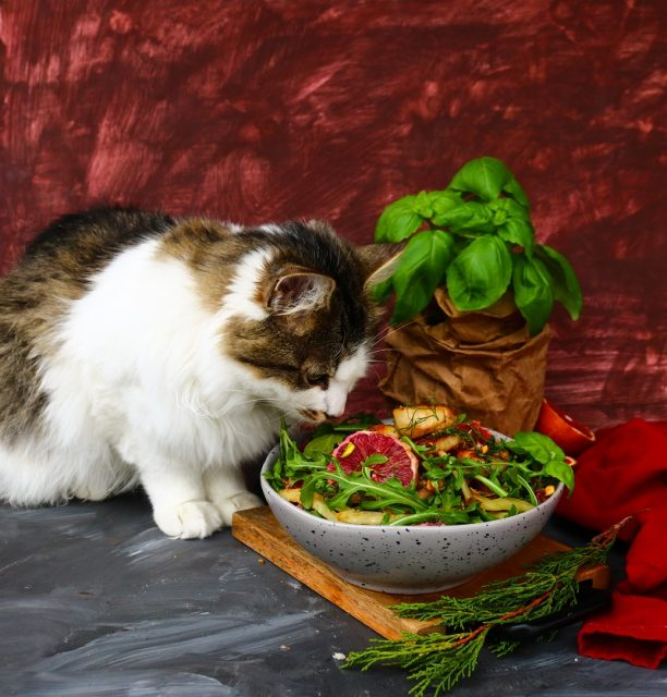 Blood Orange Scallop Salad